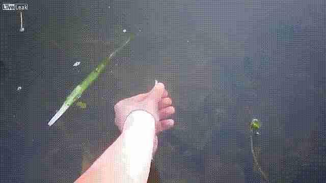 gif pescando