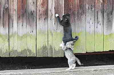 gato cargando a otro gato