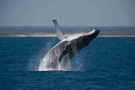 ballena gif