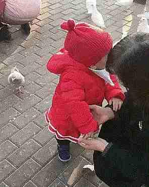 gif niño quitándole comida al pájaro