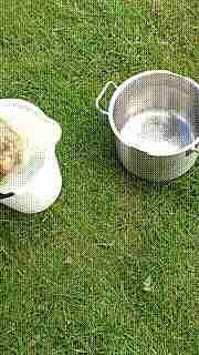 Lava papas