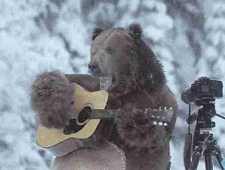 Gif oso tocando guitarra