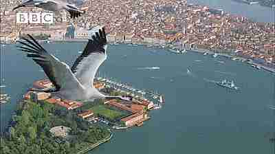 Filmando a las aves migratorias en primer plano