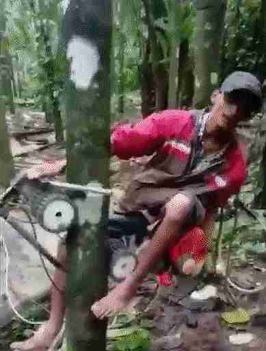 Ascensor para árboles