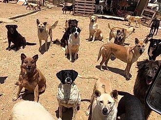 perros de calle