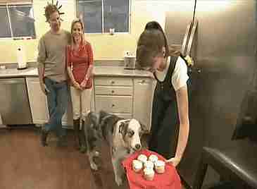 perros rogando por comida
