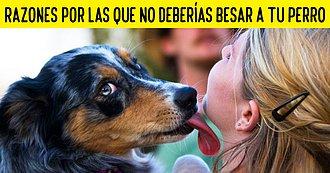 Razones Por Las Que No Deberías Besar A Tu Perro