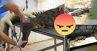 Maltrato animal a cocodrilos