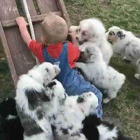 animales tiernos
