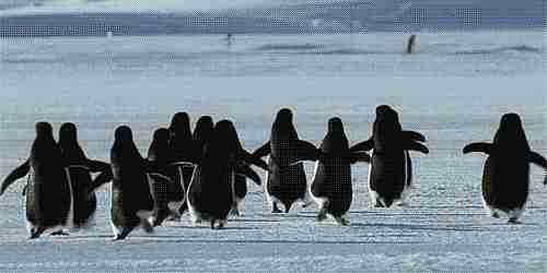 pingüinos gif