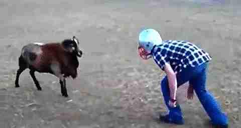 Hombre jugando con una cabra
