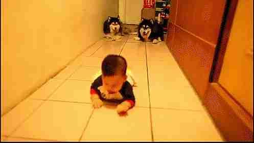 gif de perros y niño