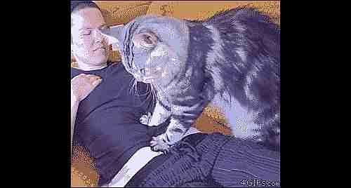 gato dándole un masaje a una chica