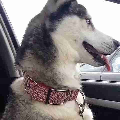 Mascota reaccionado a una visita al veterinario