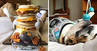 Chunky duerme con comida encima