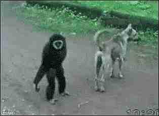 animales traviesos gif