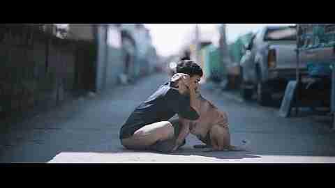 amor de mascotas gif
