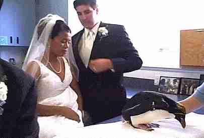 animales en las bodas