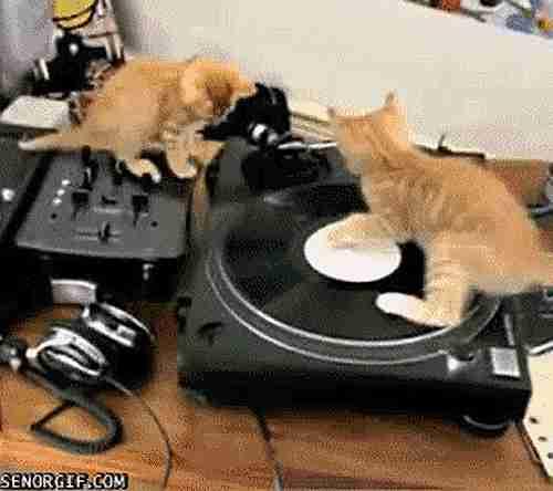 Gatos y discos