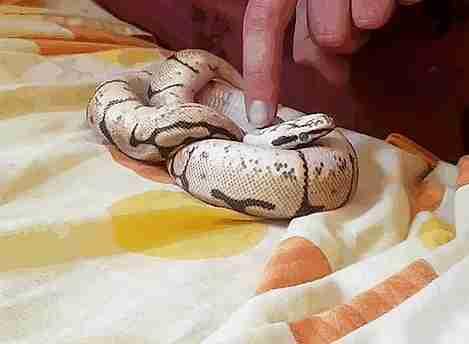 serpiente adorable