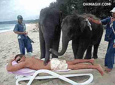 elefante masajeador